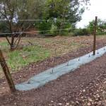 Projet «Treilles de vignes»