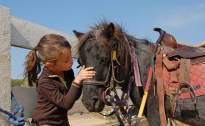 istock-9018356xsmall-pony.jpg