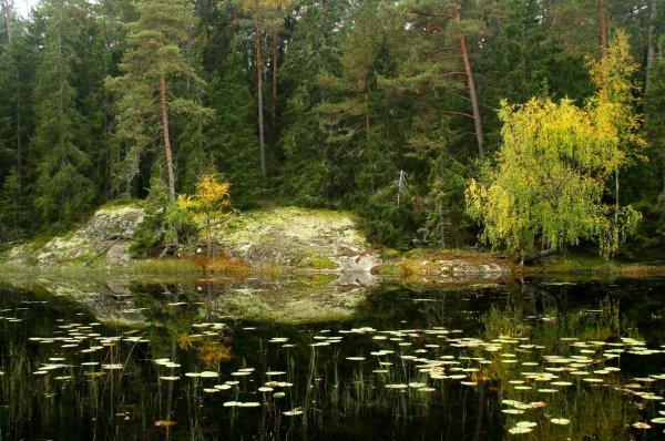 naturen med åtelkamera