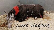 /lovesleep.jpg