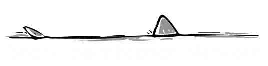 Shark Identification Network