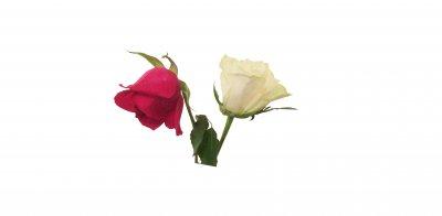 /161230-2-rosor-200-.jpg