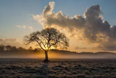 /lone-tree-1934897__340.jpg