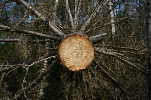 Det är en konst att välja rätt material till träemballage. Det ska vara starkt och helt utan inre sprickor för att inte riskera att det spricker under transport.