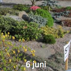 /6-juni.png