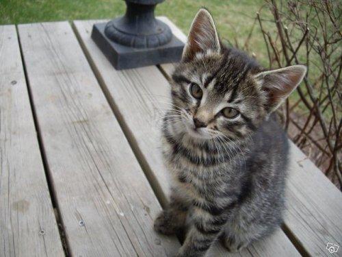 katt.jpg