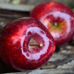 /apple-bloggbild.jpg