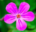 /liten-blomma.png