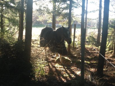 2012-11-15-09-55-41.jpg
