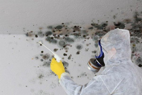 Mögelsanering av vägg och tak