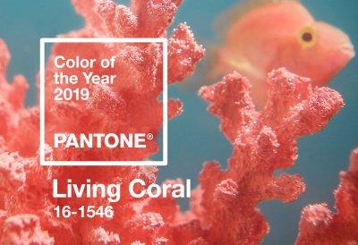 /living-coral-fiskbild.jpg