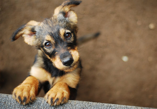 söt hundvalp