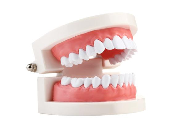 modell – tändernas namn och beteckning