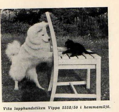 vippa-552-50.jpg