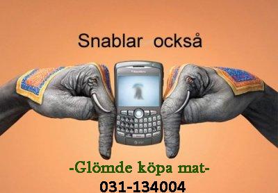 Thaifood 031-134004
