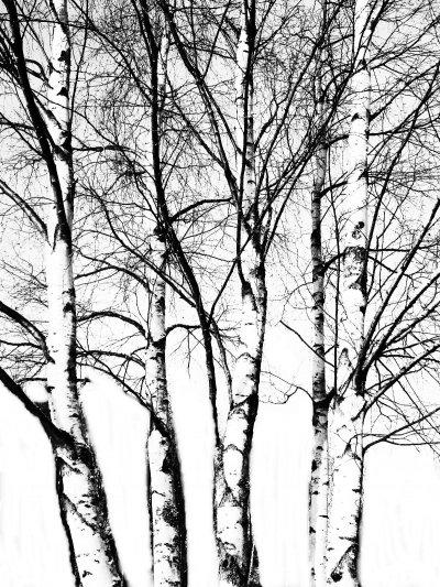 img-5898-svartvitt-copy-2.jpg