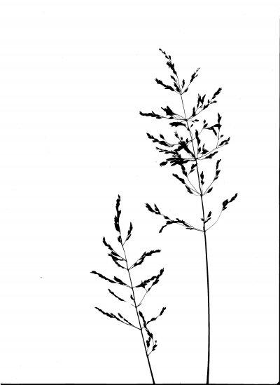 image-19.jpg