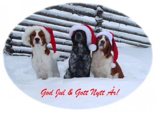 /god-jul-alla-fint-ljus-bild-2015.jpg