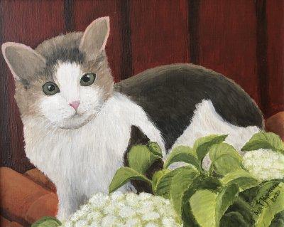 /katt-hortensia.jpg