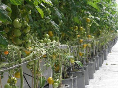 odlingen.jpg