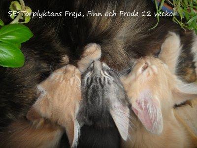 finn-frode-freja-diar-narbild.jpg