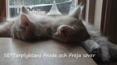 frode-och-feja-sover.jpg
