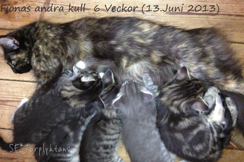 kattungerna-diar-6v.jpg
