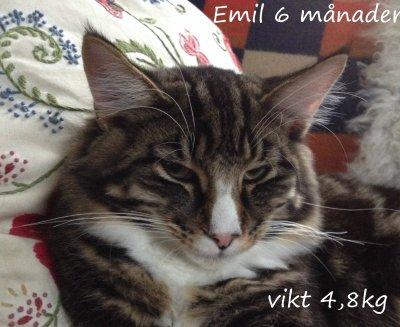 mini-emil-21v-.jpg