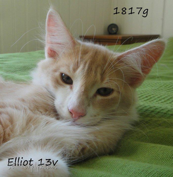 elliot-e-09-22-13v.jpg