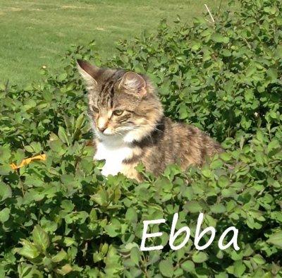 /ebba-ett-ar.jpg