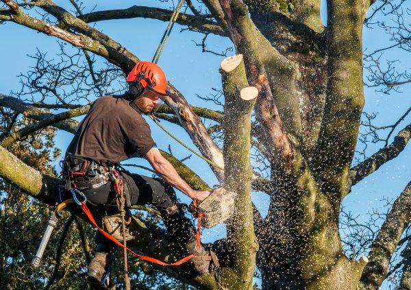 rut avdrag fälla träd