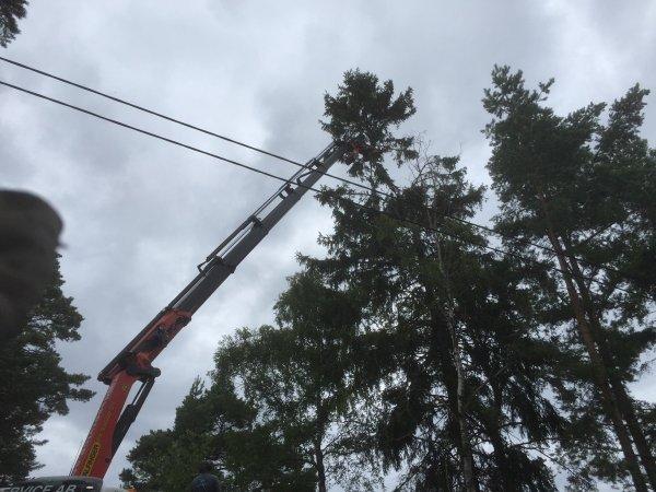 avancerad trädfällning