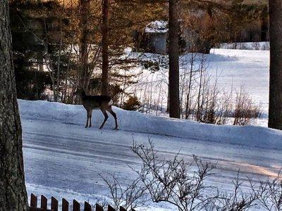 /bambi2.jpg