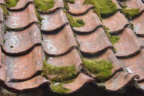 Mosa på tak som vi enkelt tar bort när du vill rengöra dina tak.