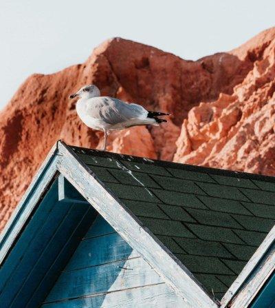 Vi tar bort spillning från fåglar på alla tak.
