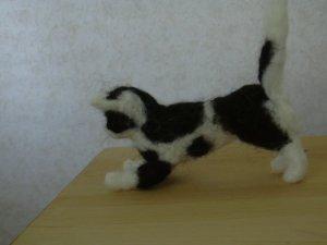 svartvit-katt