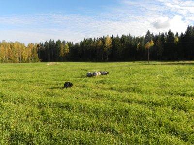 blandat201020112012-1051.jpg
