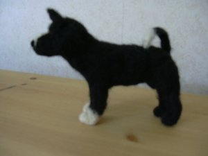 karelsk-bjornhund.jpg