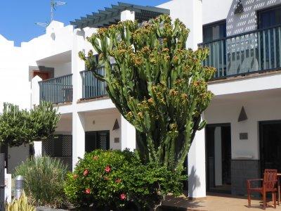 fuerteventura-2013-063.jpg