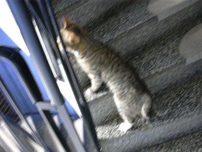 LIZA i trappen