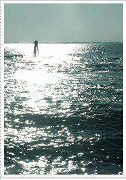 vela club venezia aspetto biologico ambientale