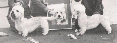 /matilda-och-justus-terrier-derby-86.jpg