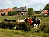 Prachtige ligging met koeien